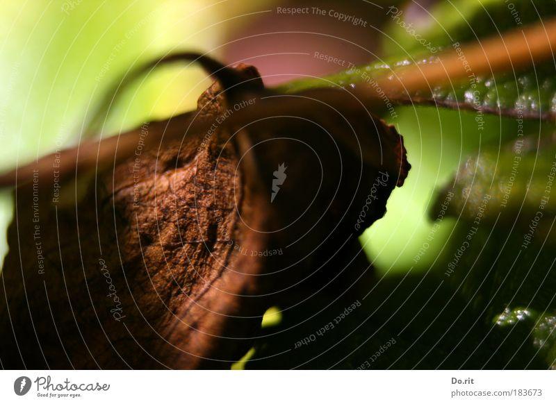 wilt meets fresh Natur alt Pflanze grün Baum Erholung Umwelt Herbst Tod braun Angst Wachstum frisch trist Blühend Lebensfreude