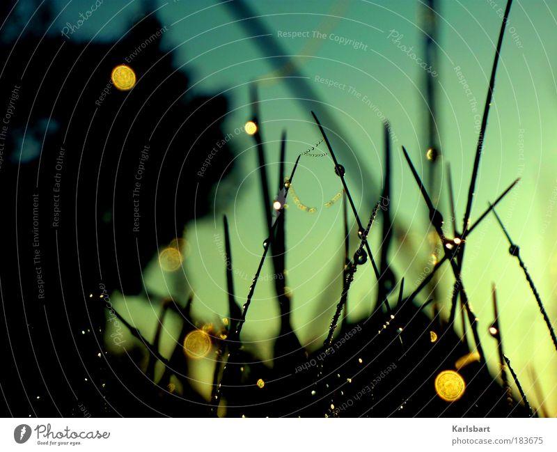 shine on you. crazy. diamond. Natur Wasser Himmel Baum Pflanze ruhig Leben Herbst Wiese Gras Freiheit Park Zufriedenheit Stimmung Feld Netz