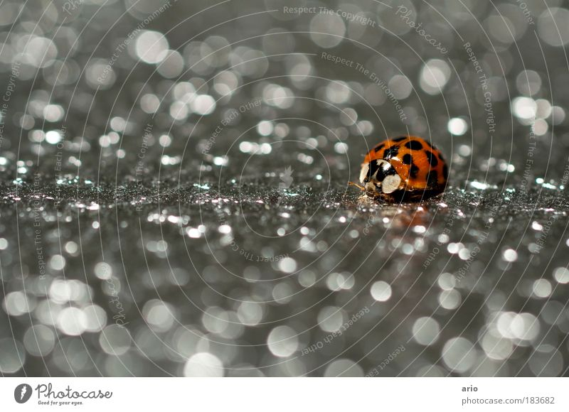 Punkte Farbfoto Innenaufnahme Nahaufnahme Makroaufnahme Menschenleer Textfreiraum links Kunstlicht Schwache Tiefenschärfe Tierporträt Umwelt Natur Wildtier