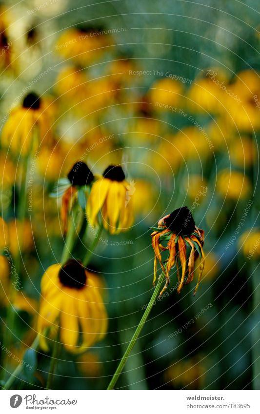 200 Blumen Natur Pflanze Park ästhetisch