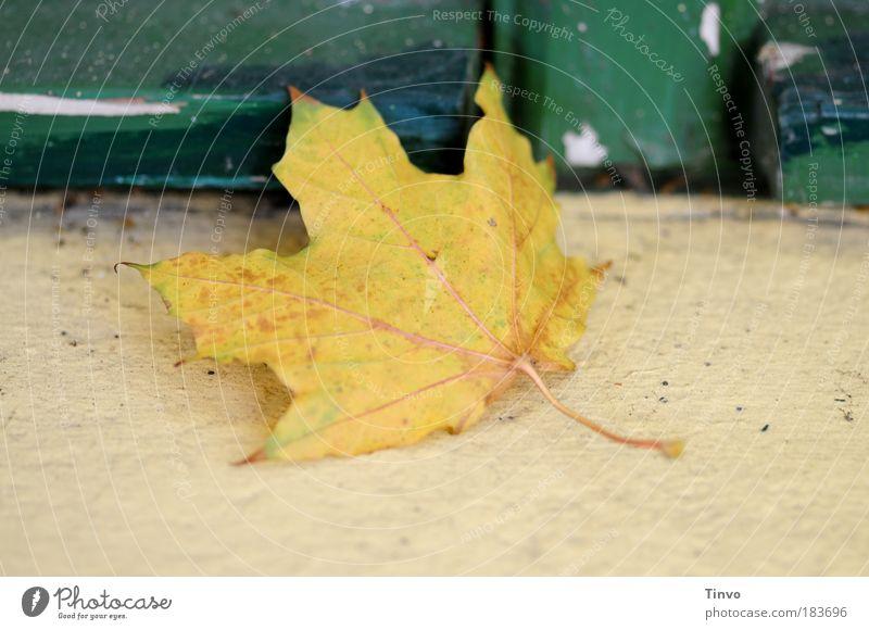 Fensterplatz alt grün Blatt gelb Herbst Gefühle Wandel & Veränderung liegen Vergänglichkeit Eingang Herbstlaub abblättern Fensterbrett herbstlich dehydrieren