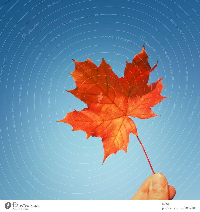 Haltbar bis 11/09 Himmel Natur blau Pflanze Hand rot Blatt Herbst Zeit leuchten ästhetisch Finger Zeichen festhalten Jahreszeiten Farbfoto