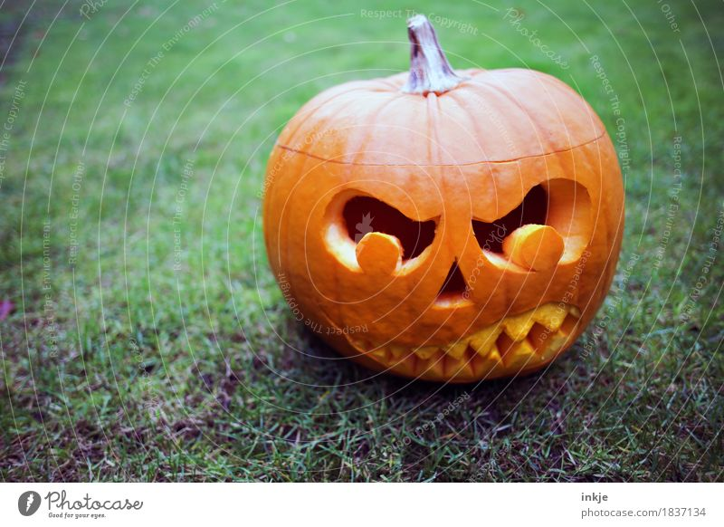 TRASH!-Kürbiskopf Halloween Herbst bedrohlich dunkel gruselig Wut orange Angst Idee Kreativität Tradition Kürbiszeit böse geschnitzt Grimasse Gebiss erschrecken