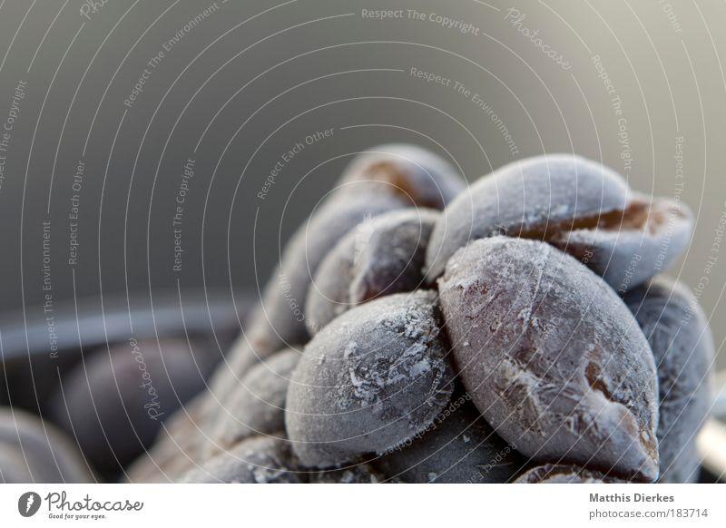 Pflaumen weiß blau Sommer kalt Eis Frucht süß Tier gefroren lecker Ernte frieren Vitamin Wespen konservieren robust