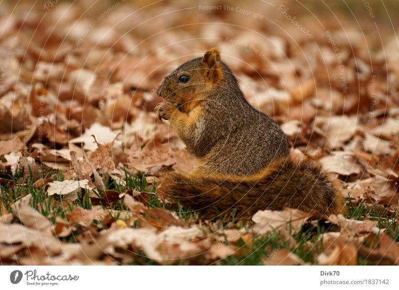 In einem Bett aus Laub. grün Blatt Tier ruhig Wald Umwelt kalt Essen Herbst Wiese Gras klein Garten braun Park Wildtier