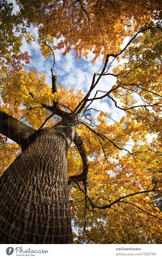 Herbstfarben Natur alt Himmel Baum blau Pflanze Blatt Wolken gelb Wald Herbst Park Luft braun Umwelt groß