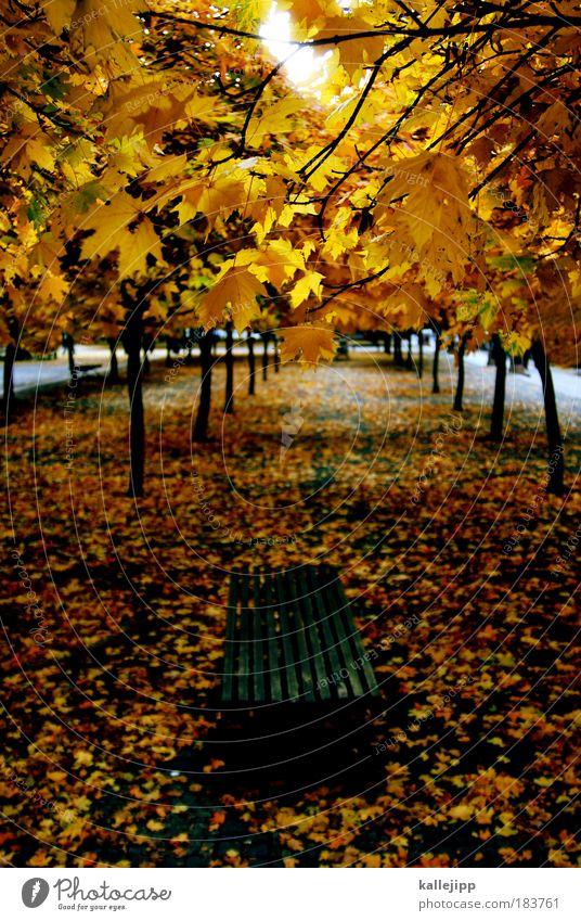 a walk in the park Farbfoto mehrfarbig Außenaufnahme Tag Licht Schatten Kontrast Silhouette Vogelperspektive Umwelt Natur Landschaft Herbst Klima Wetter Baum