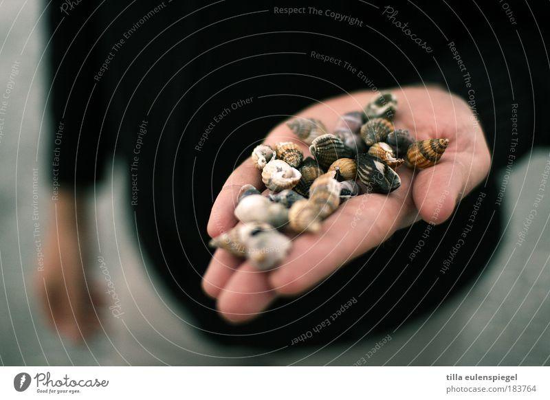 eine hand voll ... Mensch Natur Mann Hand Strand Erwachsene Erholung Herbst Küste Freizeit & Hobby maskulin Ausflug Tier zeigen Sammlung Muschel