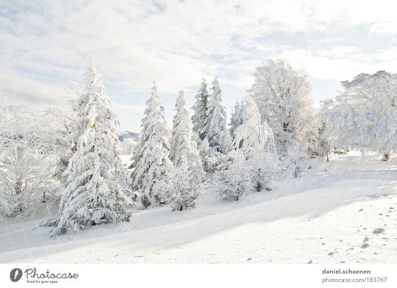 weiß_1 Gedeckte Farben Licht Freizeit & Hobby Ferien & Urlaub & Reisen Winter Schnee Winterurlaub Berge u. Gebirge Eis Frost Wald hell kalt Erholung Tanne