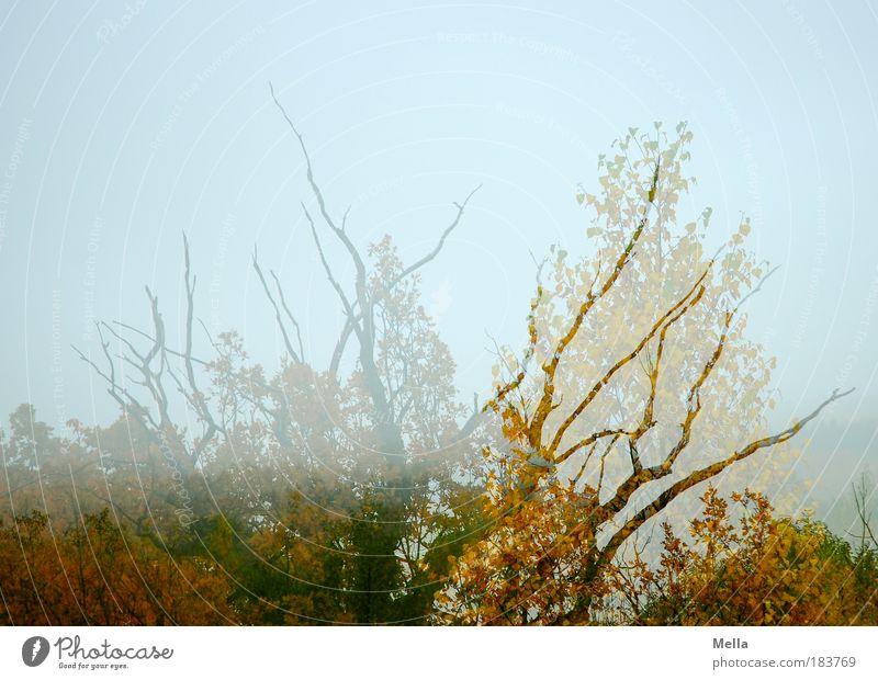 Übergang Natur Himmel Baum Pflanze ruhig Blatt Wald Leben Herbst träumen Landschaft Luft Stimmung Umwelt Wandel & Veränderung Vergänglichkeit