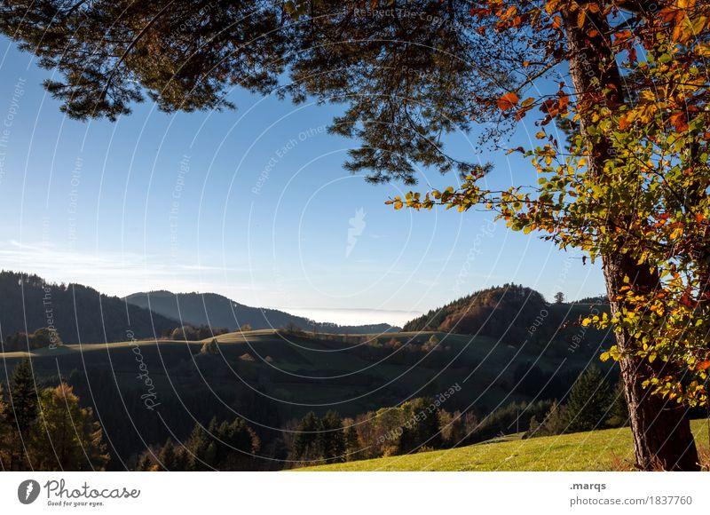 Ferne Ausflug Natur Landschaft Wolkenloser Himmel Sommer Herbst Baum Blatt Ast Wiese Wald Hügel Erholung schön Stimmung Farbfoto Außenaufnahme Menschenleer