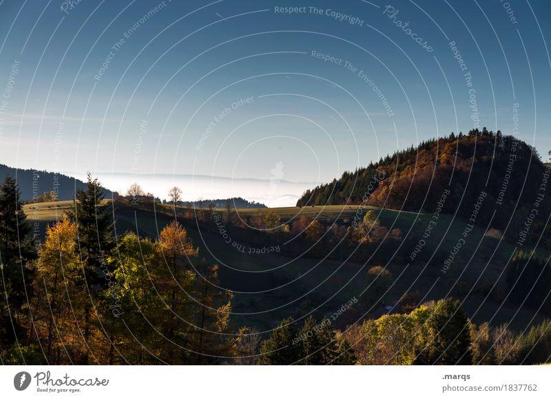 Hügel Ausflug Natur Landschaft Wolkenloser Himmel Sommer Herbst Wiese Wald Schwarzwald Erholung schön Stimmung Farbfoto Außenaufnahme Menschenleer