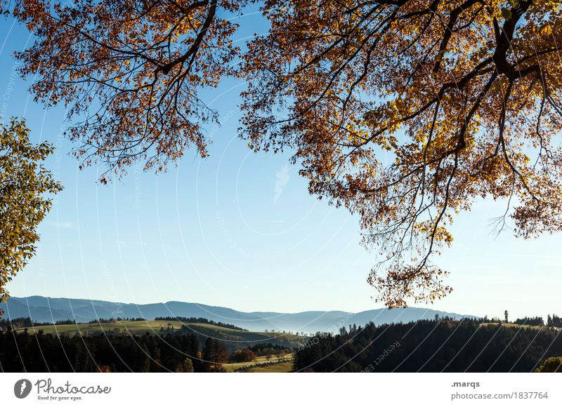 Ausblick Ausflug Natur Landschaft Wolkenloser Himmel Sommer Herbst Schönes Wetter Baum Blatt Ast Wiese Wald Hügel Schwarzwald Erholung schön Stimmung Farbfoto