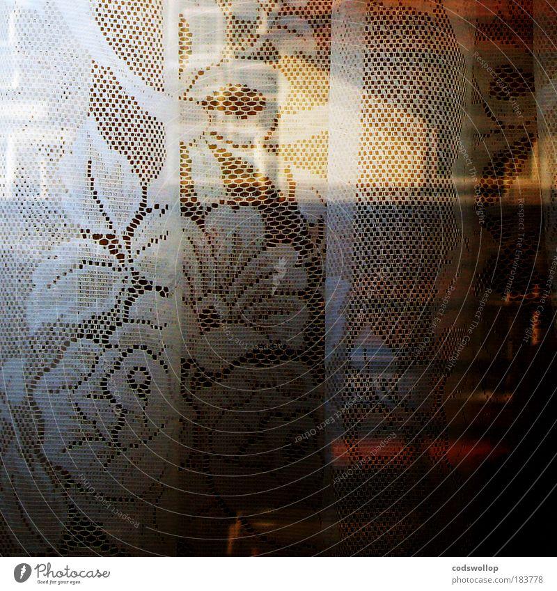 curtain twitcher Farbfoto Außenaufnahme Detailaufnahme abstrakt Strukturen & Formen Textfreiraum rechts Dämmerung Lifestyle elegant Stil Häusliches Leben