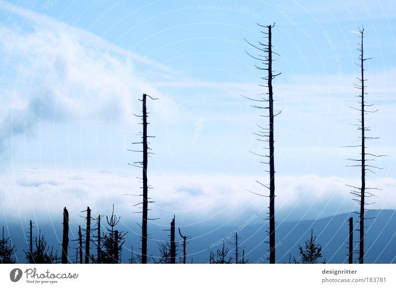 Phönix Natur schön Baum Pflanze Wald Umwelt Tod Leben Traurigkeit Hoffnung Trauer Umweltschutz Sorge Käfer Baumrinde hässlich