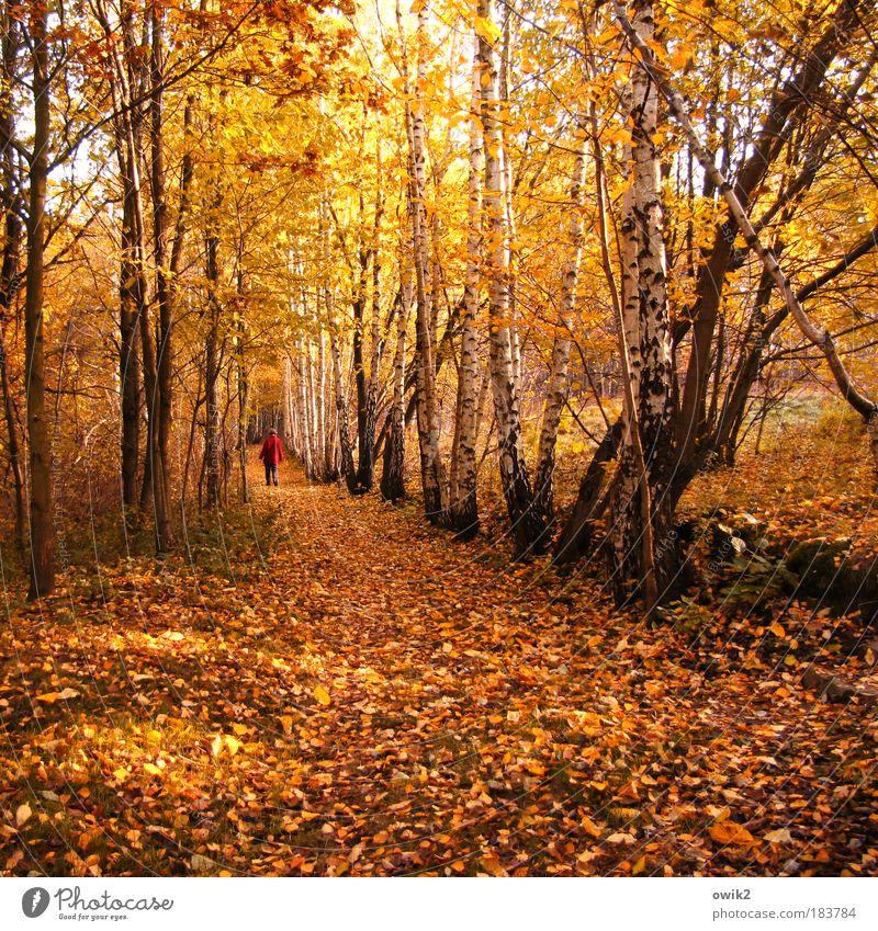 In den Herbst Farbfoto mehrfarbig Außenaufnahme Textfreiraum unten Tag Licht Schatten Kontrast Sonnenlicht Rückansicht Mensch Frau Erwachsene Partner 1 Natur
