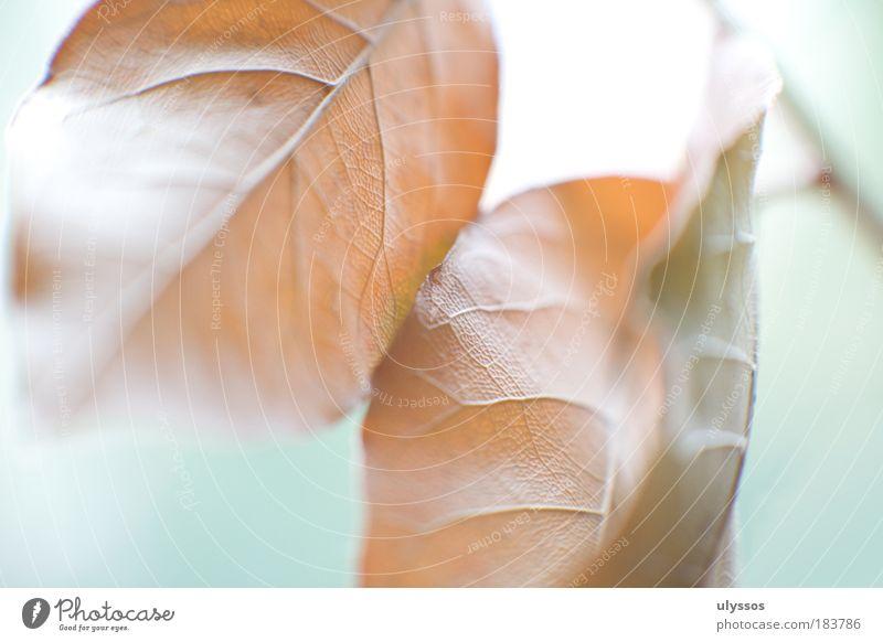 blätterherbst Farbfoto Makroaufnahme abstrakt Strukturen & Formen Menschenleer Hintergrund neutral High Key Unschärfe Herbst Pflanze Blatt braun grün weiß