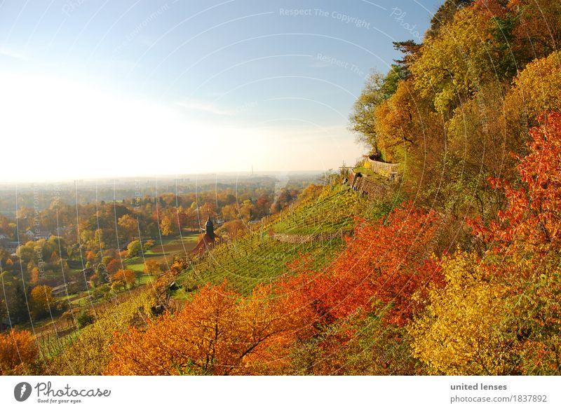 DR# Pillnitz V Natur Pflanze Landschaft Wald Umwelt Herbst Wetter ästhetisch Kirche Schönes Wetter Dresden Herbstlaub herbstlich Kleinstadt Sachsen