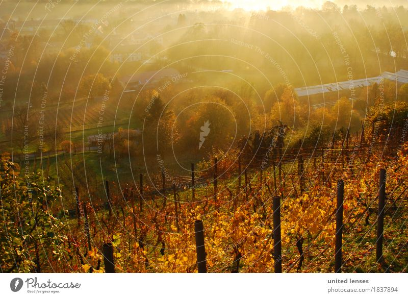 DR# Pillnitz III Landschaft Herbst Kunst Nebel ästhetisch Dresden Herbstlaub herbstlich Herbstfärbung Weinberg Herbstbeginn Landschaftsformen Herbstwetter
