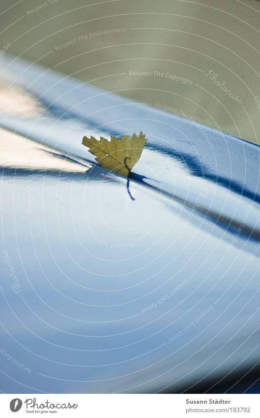 `s klemmt Natur Baum Pflanze Blatt Umwelt Herbst PKW stoppen festhalten fallen Laubbaum fixieren Trabbi Klemme klemmen Heckklappe