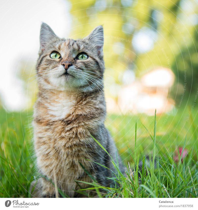 Ein letztes mal miauuu Katze Natur Pflanze Sommer grün schön Baum Tier ruhig gelb Gras Garten braun Zufriedenheit Kommunizieren sitzen