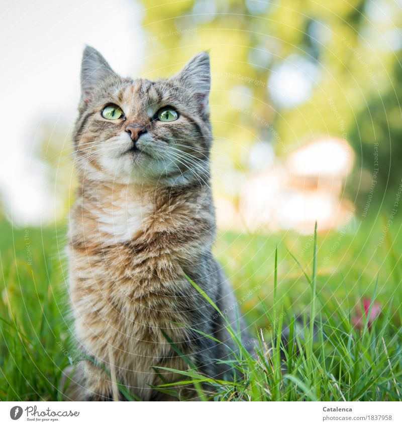 Ein letztes mal miauuu Natur Pflanze Sommer Schönes Wetter Baum Gras Garten Haustier Katze 1 Tier beobachten sitzen schön Neugier niedlich braun gelb grün