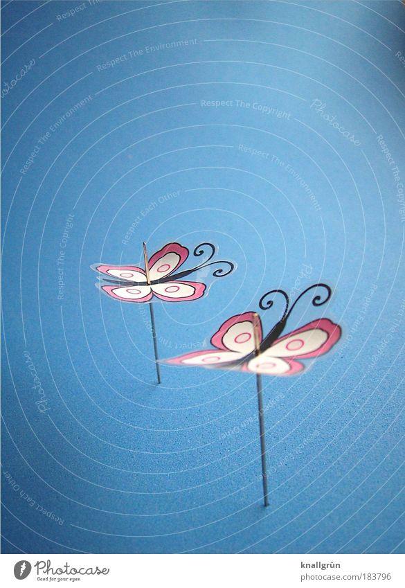 Nur fliegen ist schöner! Farbfoto Studioaufnahme Nahaufnahme Menschenleer Textfreiraum links Textfreiraum oben Hintergrund neutral Schmetterling 2 Tier Nadel
