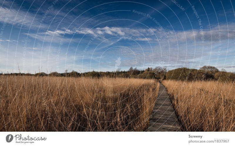 Zum Herbst da lang... Himmel Natur Ferien & Urlaub & Reisen Pflanze Baum Landschaft Wolken ruhig Wege & Pfade Gras Tourismus Ausflug wandern Sträucher
