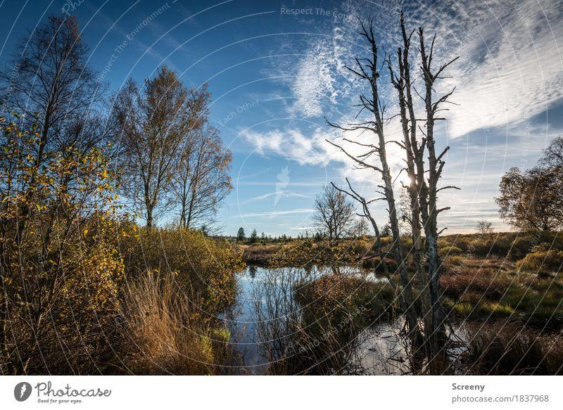 Das Moor Ferien & Urlaub & Reisen Tourismus Ausflug Abenteuer Natur Landschaft Pflanze Urelemente Luft Wasser Himmel Wolken Sonne Herbst Schönes Wetter Baum