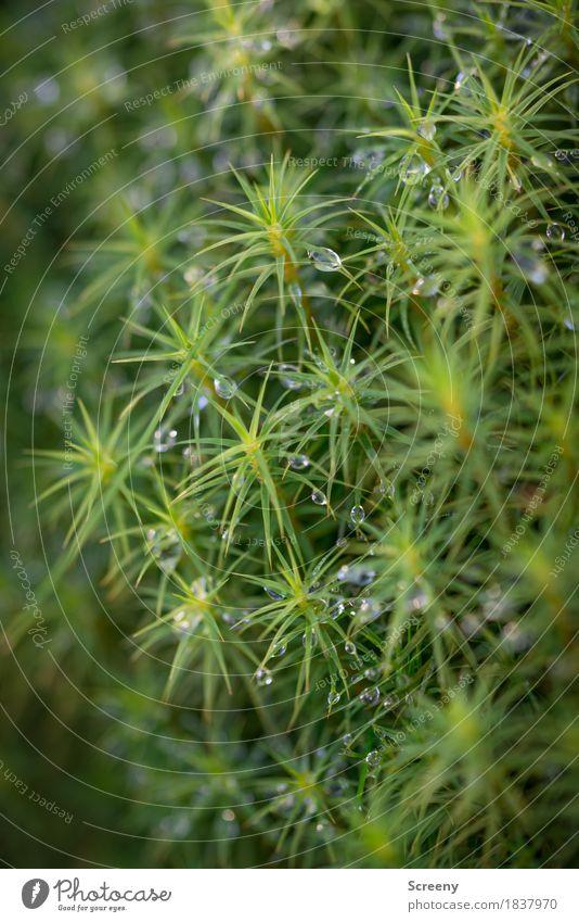 Rauhreif auf Moos Natur Pflanze Urelemente Wasser Wassertropfen Herbst Wald kalt nass grün frisch Raureif Farbfoto Außenaufnahme Detailaufnahme Makroaufnahme