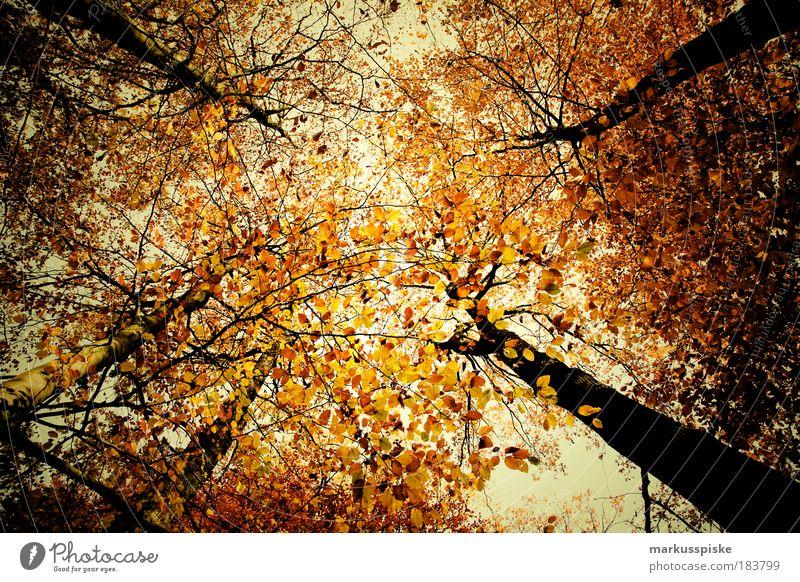 herbstwald Textfreiraum Mitte Umwelt Natur Landschaft Pflanze Luft Himmel Wolken Herbst Klima Wetter Schönes Wetter schlechtes Wetter Baum Blatt Park Wald atmen