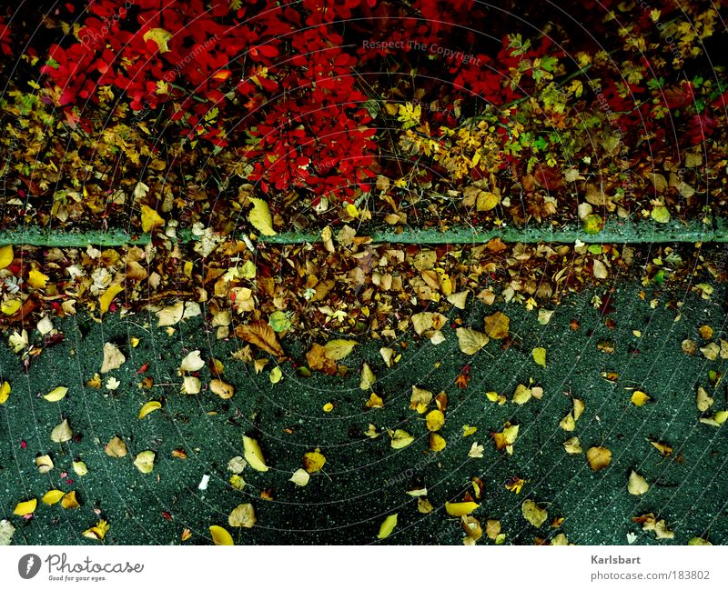 müssen. Natur Pflanze Blatt Straße Leben Herbst Wege & Pfade Sträucher authentisch Wandel & Veränderung Vergänglichkeit Verkehrswege Herbstlaub Bordsteinkante
