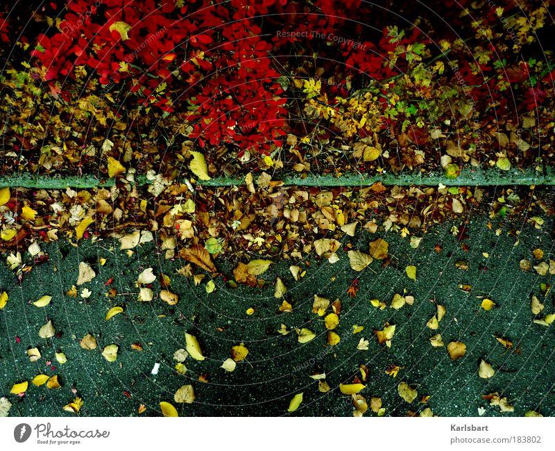 müssen. Natur Pflanze Blatt Straße Leben Herbst Wege & Pfade Sträucher authentisch Wandel & Veränderung Vergänglichkeit Verkehrswege Herbstlaub Bordsteinkante herbstlich Herbstfärbung
