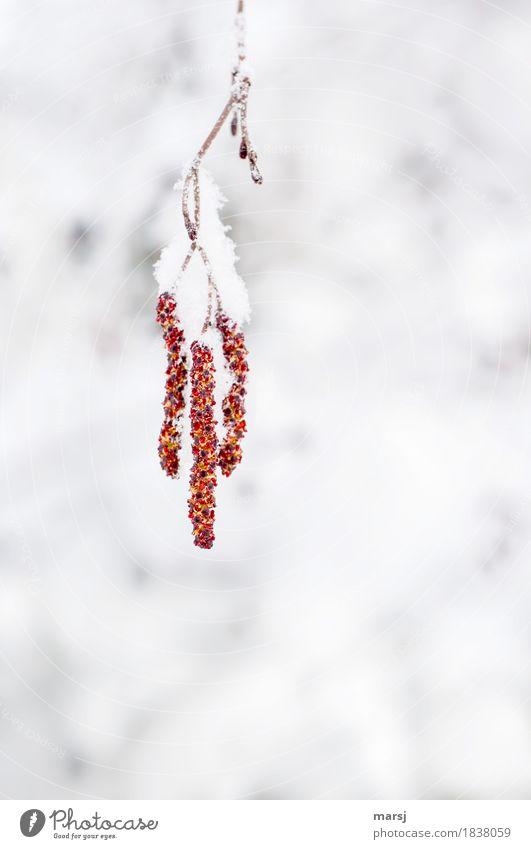 Gemeinsam Abhängen Natur rot Winter kalt Schnee Zusammensein Schneefall Eis Ast Hoffnung Frost hängen kuschlig