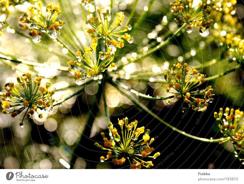 Perlenwelt Natur Wasser schön Blume grün Pflanze Sommer Blatt gelb Wiese träumen Park Regen hell glänzend elegant
