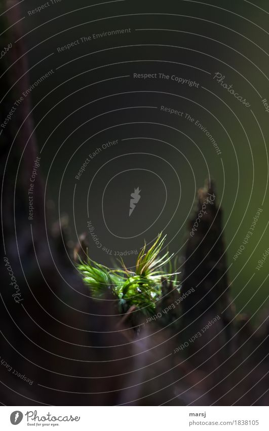 Im Scheinwerferlicht Natur Pflanze grün Einsamkeit dunkel Traurigkeit außergewöhnlich leuchten Trauer Moos verträumt Grünpflanze Wildpflanze leuchtend grün