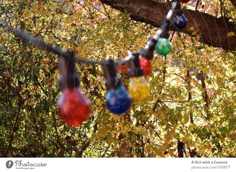 Happy Lights Natur Blatt Lampe Herbst hell glänzend Glas Wetter Fröhlichkeit rund Dekoration & Verzierung außergewöhnlich Schnur leuchten Freundlichkeit hängen