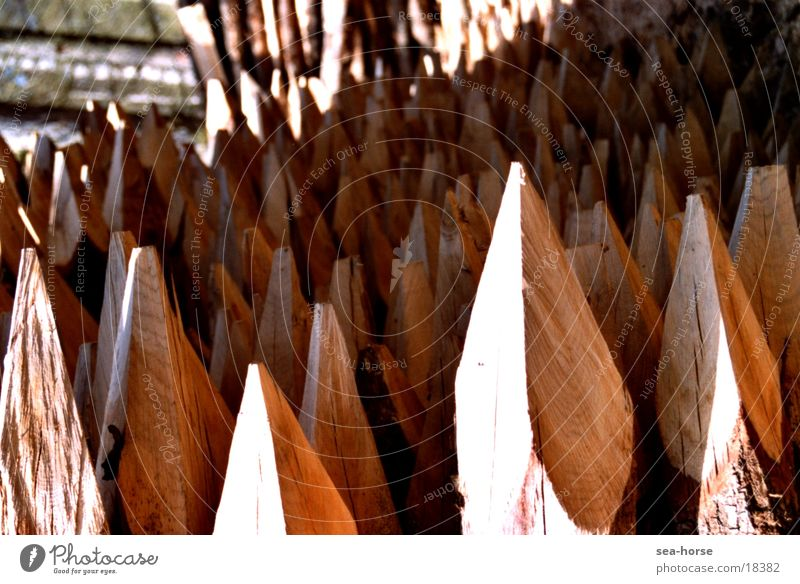spitzenwerte 1 Holz Wald Forstwirtschaft ökologisch