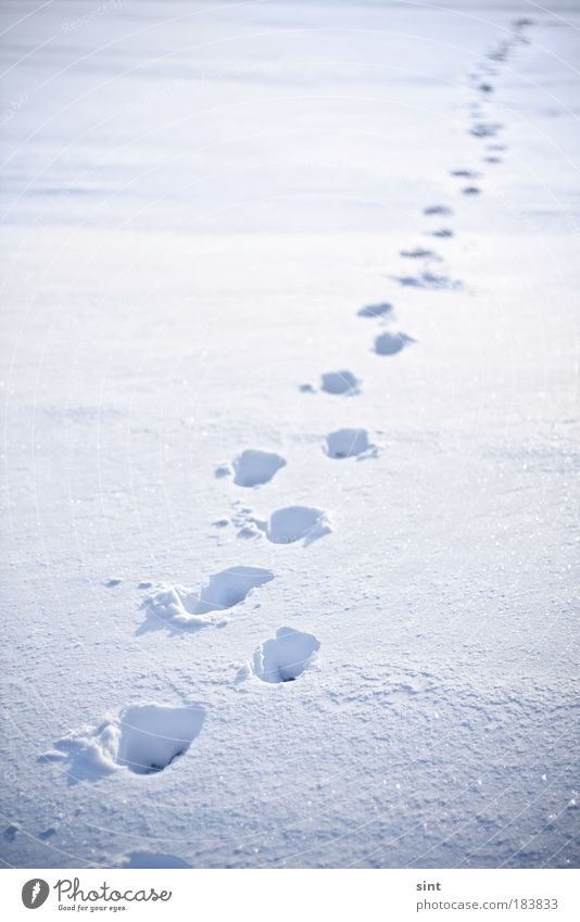 neuschnee Natur weiß Winter ruhig Einsamkeit kalt Schnee Erholung Freiheit träumen wandern gehen Wetter laufen Abenteuer Sauberkeit