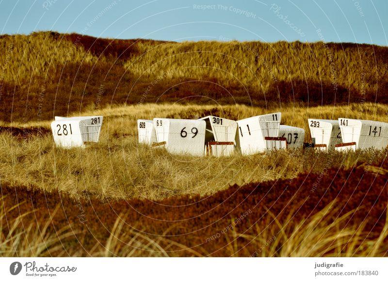 In den Dünen Farbfoto Außenaufnahme Tag Ferien & Urlaub & Reisen Tourismus Strand Meer Umwelt Natur Landschaft Pflanze Himmel Schönes Wetter Gras Küste Nordsee