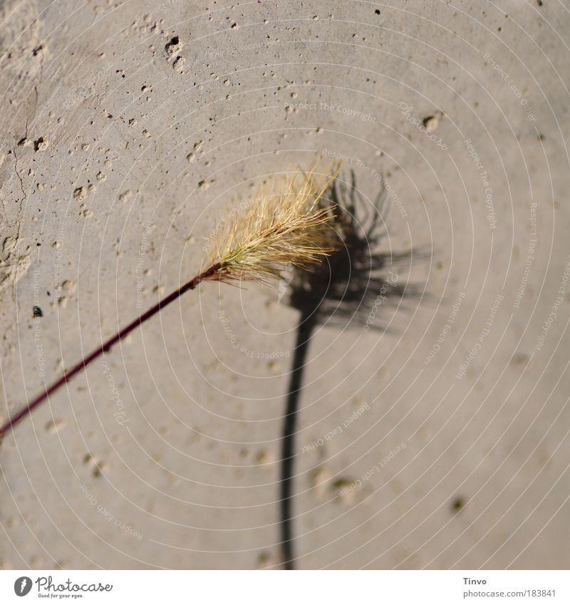 Großstadtbauchpinseln Sommer Herbst Wand Gras Mauer Beton Fassade Stengel Partnerschaft Putz hart Gegenteil anlehnen sensibel stur Reinigen