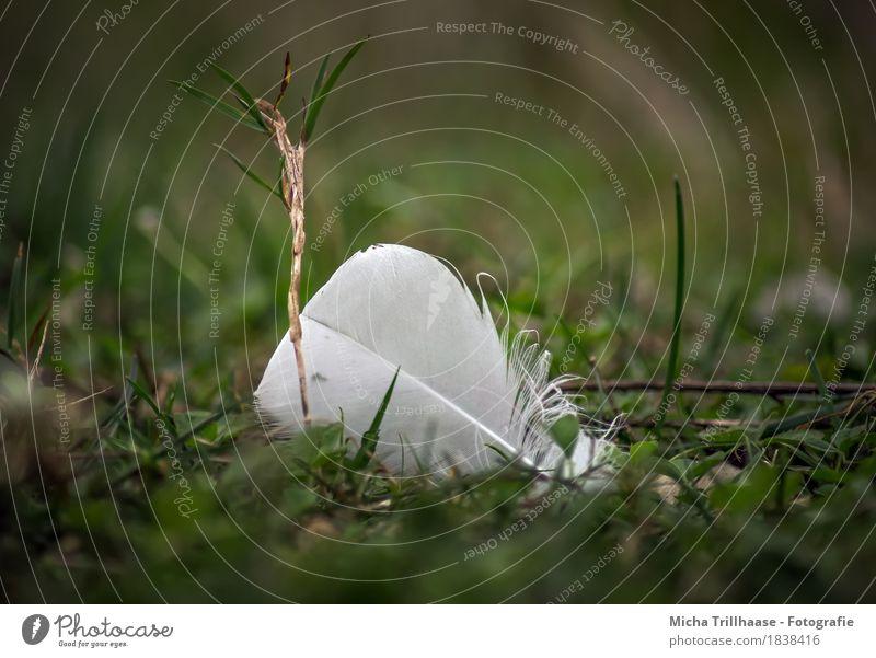Vogelfeder im Gras Natur Pflanze Tier Grünpflanze Wiese Feder fliegen ästhetisch elegant klein nah natürlich weich gelb grün weiß Gefühle Tierliebe ruhig