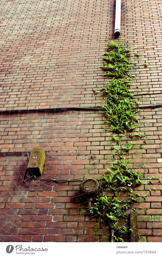 wandgemüse alt grün rot Haus Wand Mauer Gebäude Architektur nass Fassade Wachstum Kabel kaputt wild Backstein