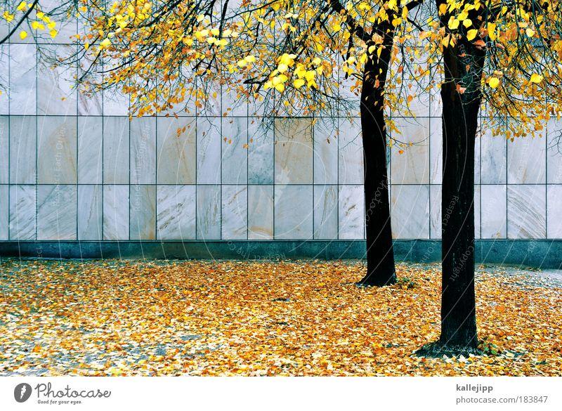 golden years Baum Stadt Blatt Herbst Park Wetter Fassade Wandel & Veränderung Klima Raster Rechteck Laubbaum Sandstein Steinplatten Rutschgefahr