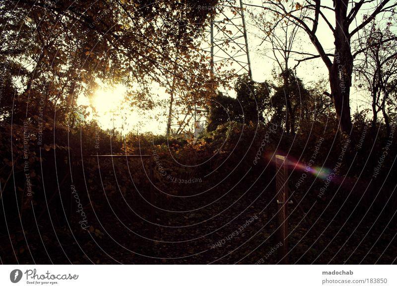 no wild things Natur schön Baum Sonne Pflanze ruhig Blatt Einsamkeit Wald dunkel Erholung Herbst Garten Wege & Pfade Landschaft Zufriedenheit