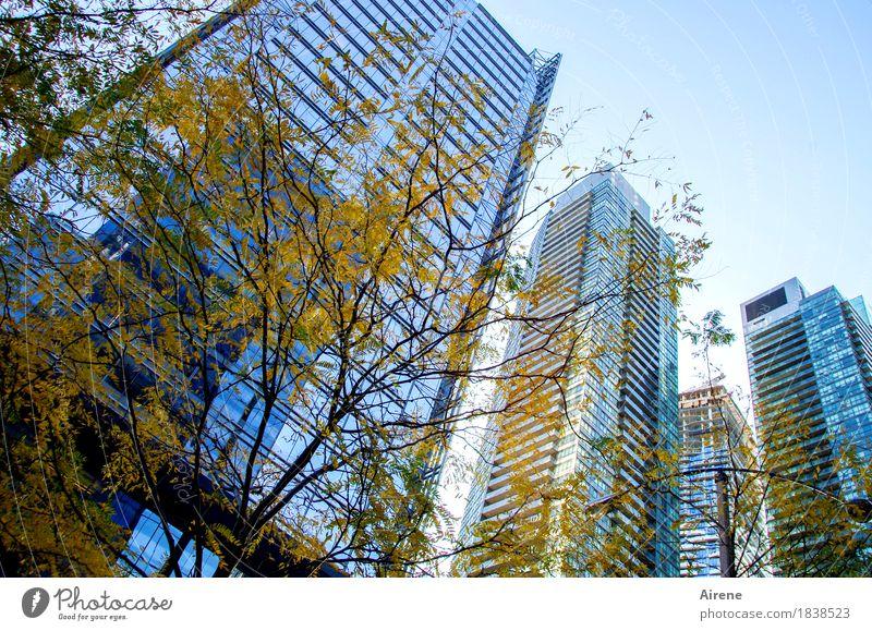 herbstgelb vor blaustich Herbst Schönes Wetter Baum Herbstlaub Stadt Skyline Hochhaus Fassade Beton Glas Stahl Häusliches Leben gigantisch hoch verstört