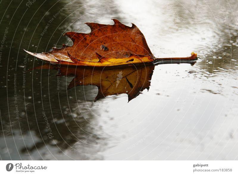 fallen leaves on the ground Natur Pflanze Wasser Einsamkeit Blatt kalt Herbst natürlich braun liegen Regen Wetter Erde nass Vergänglichkeit Wandel & Veränderung