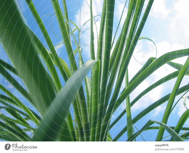 kaktus agave pflanze ein lizenzfreies stock foto von photocase. Black Bedroom Furniture Sets. Home Design Ideas