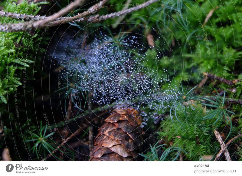 Tautropfen am Spinnennetz auf dem Waldboden Natur Ferien & Urlaub & Reisen Pflanze grün Baum Landschaft Erholung Tier Umwelt Herbst außergewöhnlich braun
