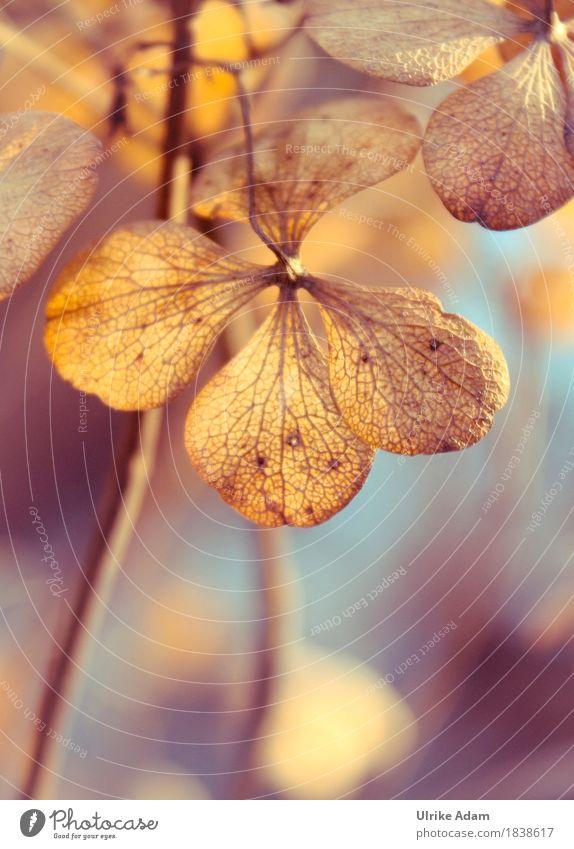 Herbstliche Hortensien elegant Stil Design Wohnung Garten Innenarchitektur Dekoration & Verzierung Tapete Bild Leinwand Poster Postkarte Natur Pflanze
